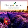 cropped-lavender-field-young-living-1.jpg
